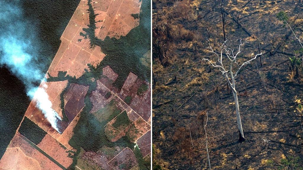 Skogsbränder i Amazonas.