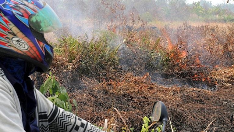 Bränder på Indonesien, Sumatra. Foto: Rony Muharrman/Scanpix.