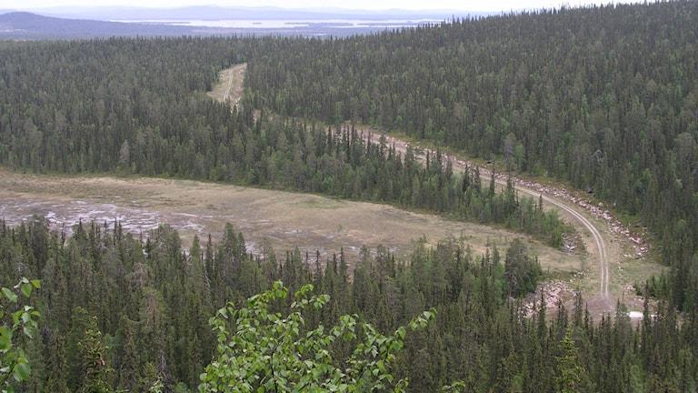 Biologiskt värdefull skog i norra Sverige. Arkivbild.