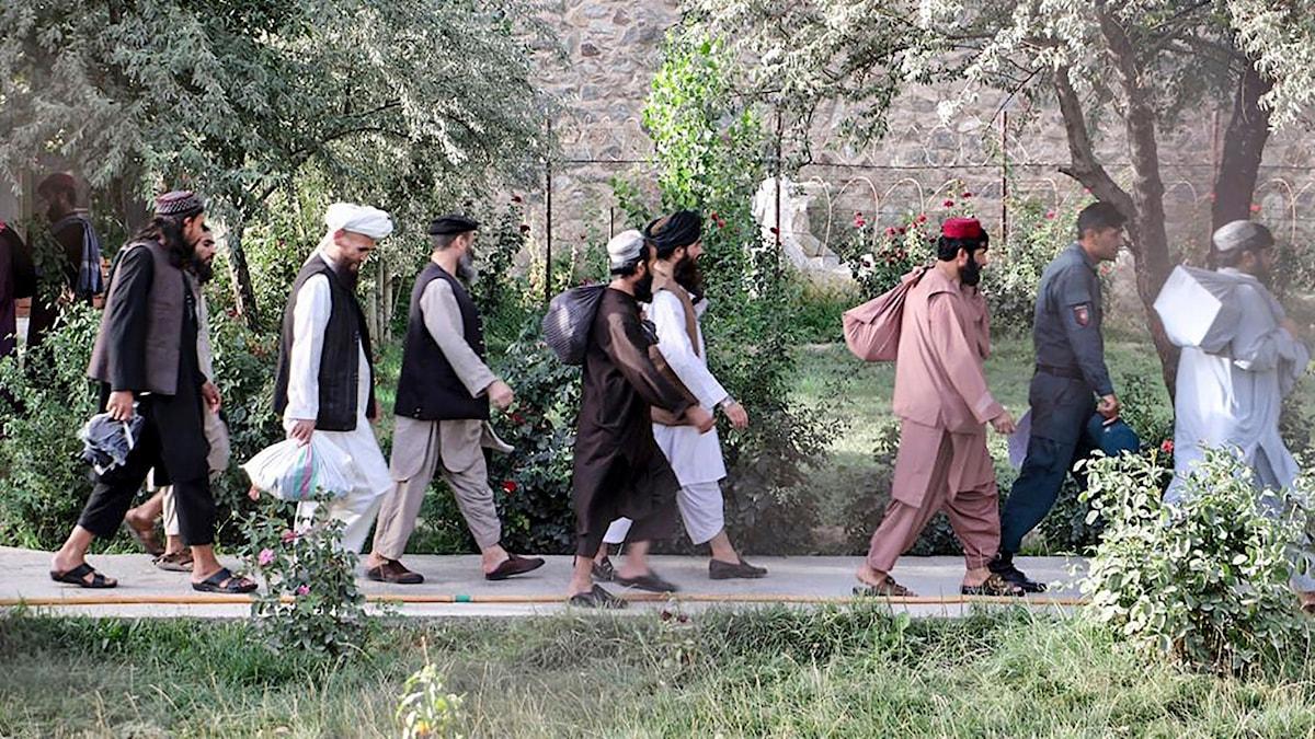 Afghanistan har börjat släppa talibanska fångar