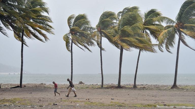 Folk går på en blåsig strand. Hector Retamal/TT.