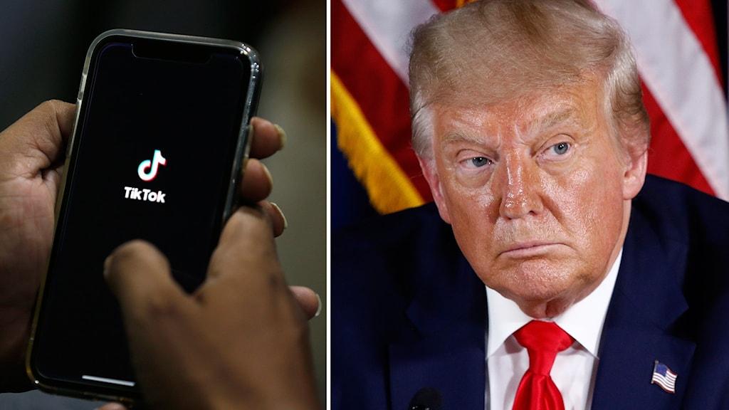 Kollage: Telefon med appen Tiktok och Donald Trump.