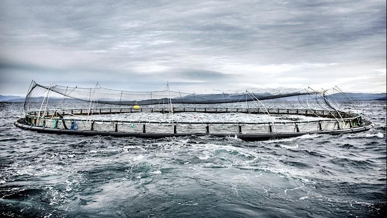 Fiskodling i Norge.