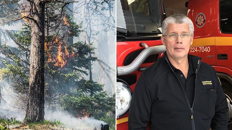 Tvådelad bild: Träd som brinner, man framför brandbilar.