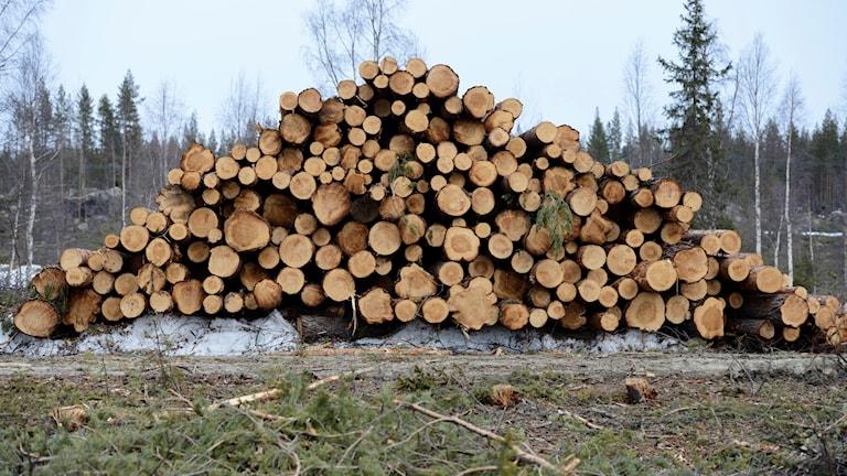 Skogsavverkning (arkivbild). Foto: Henrik Montgomery/TT.