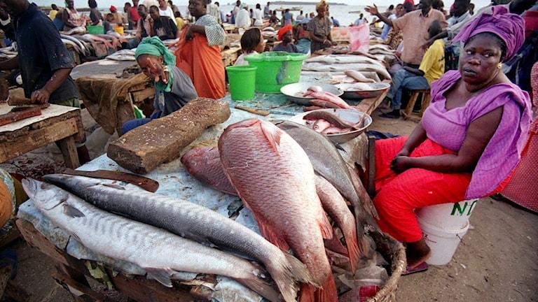 Fiskmarknad i Senegal, Västafrika.