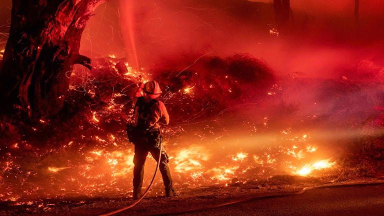 Brandman sprutar vatten på skogsbrandslågor