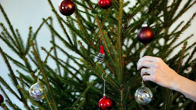 En julgran.