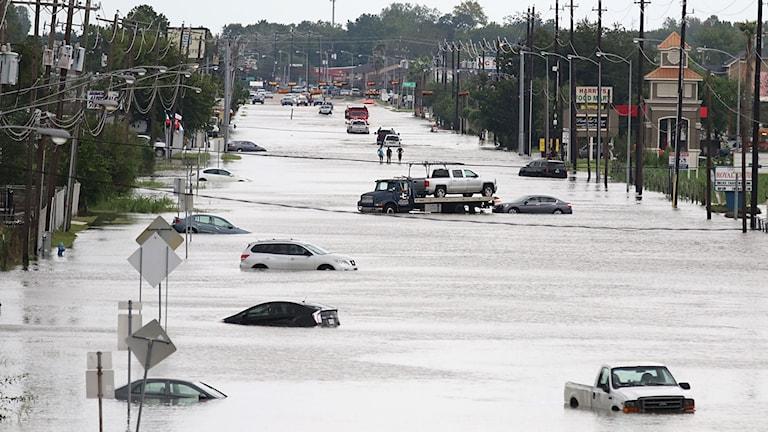 Översvämmad gata med översvämmade bilar i Huston.