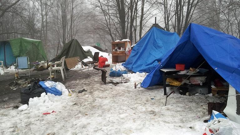 Blå och gröna tält i en skog med snötäckt mark. Foto: Joel Wendle/Sveriges Radio.