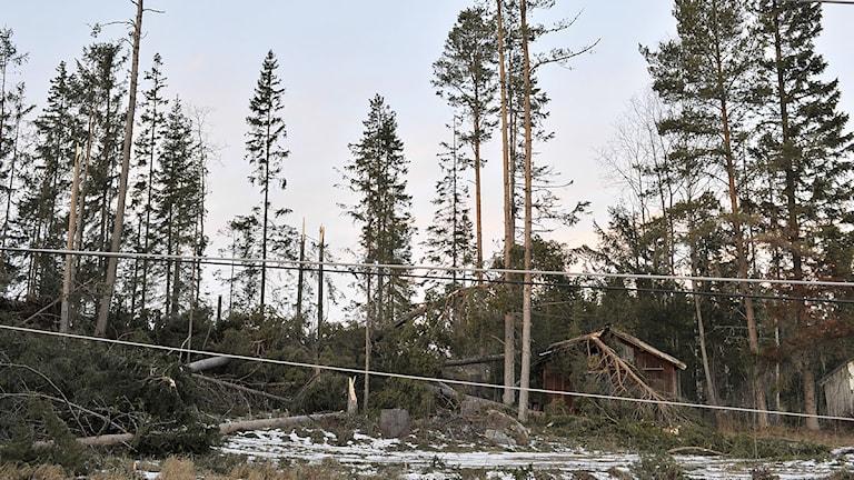 Nedfallna träd och elledningar i Ångsta söder om Östersund 13 december 2013. Foto: Tommy Andersson/TT