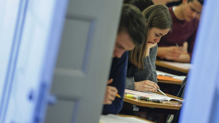 Personer som skriver högskoleprovet. Foto: Fredrik Persson/TT.