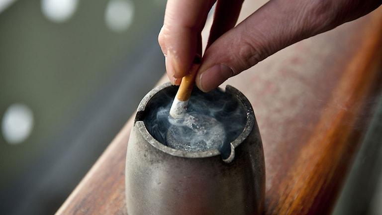 En person släcker en cigarett. Foto: Fredrik Varfjell/TT.