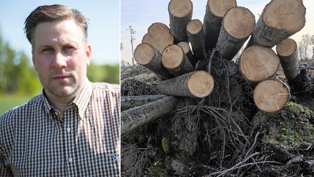 Till vänster: Moderaternas landsbygdspolitiske talesperson John Widegren. Till höger: avverkad skog.