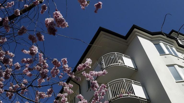 Flerbostadshus med balkonger.