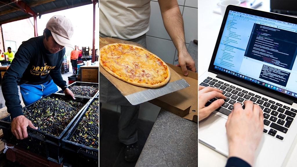 Delad bild: bärplockare, pizzabagare, programmerare