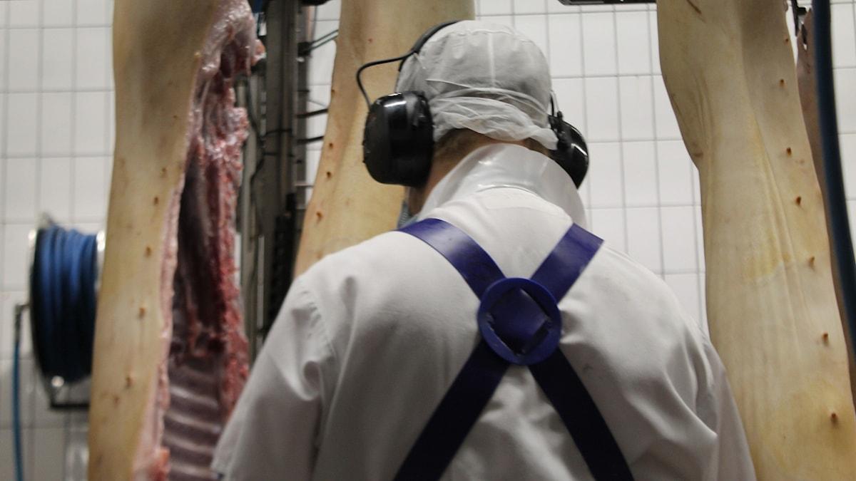 En person i vit overall med hörselkåpor, i bakgrunden hängande griskroppar.
