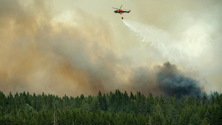 Helikopter släpper vatten över skogsbranden i Västmanland. Foto: TT