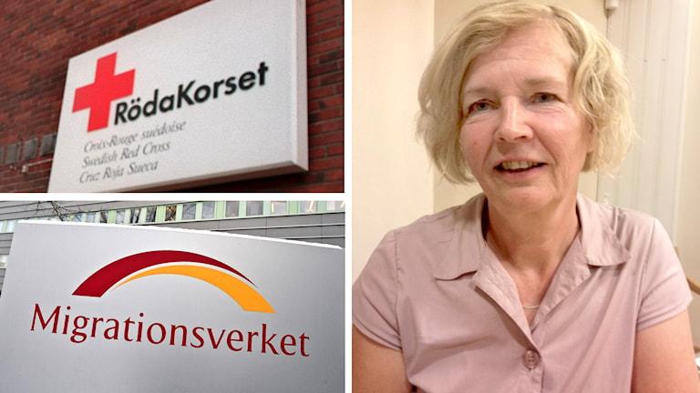 Migrationsverkets logotyp och Anki Carlsson gruppchef migrationsenheten Röda Korset. Foto: TT / Sveriges Radio