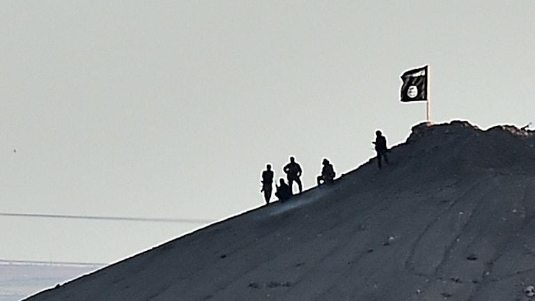 Isis, Kobane