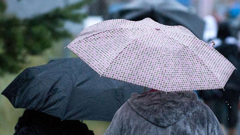 Paraplyer på rad i Åhus på den skånska östkusten. Foto: Johan Nilsson/TT.
