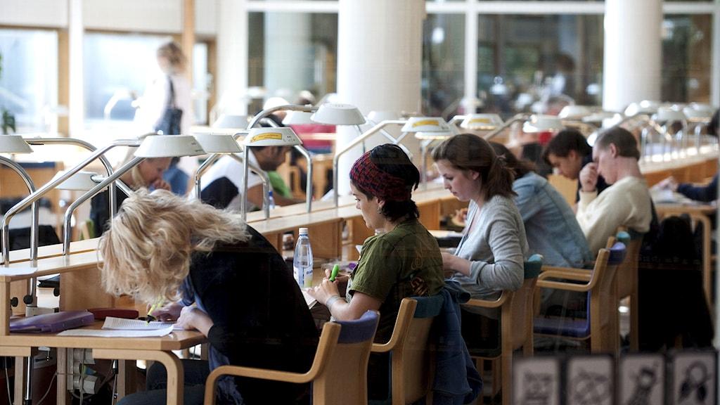 Studenter studerar i biblioteket på Stockholms universitet. Foto: Bertil Ericson/TT.