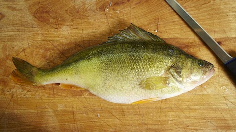Abborre, fisk