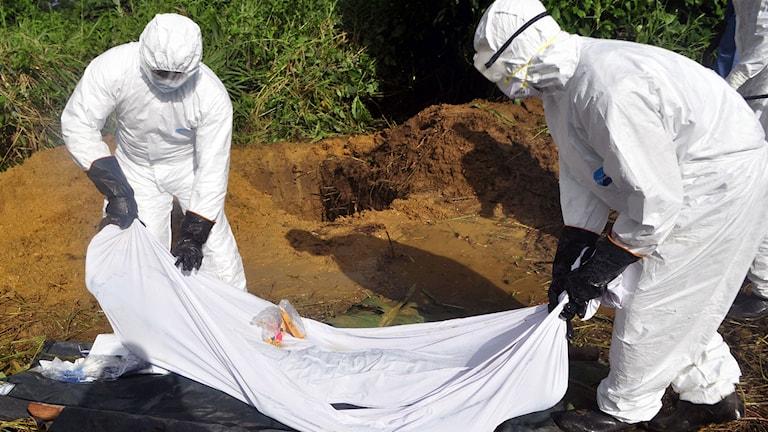 Två hjälparbetare begraver en man som misstänks ha dött av ebola i Monrovia, Liberia. Foto:Abbas Dulleh/TT.