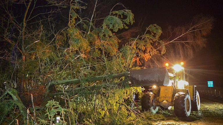 Träd som knäckts och ramlat ned över en väg i Hörby, i Skåne. Foto: TT