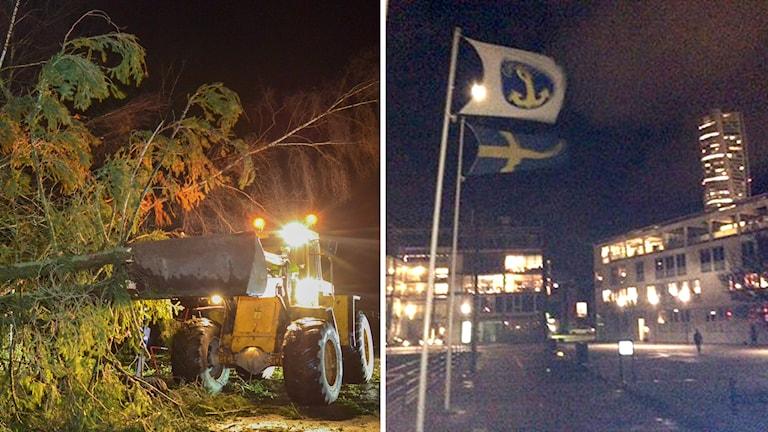Nedfällt träd efter stormen, flaggor i västra hamnen i Malmö visar vindens styrka. Foto: TT / Sveriges Radio