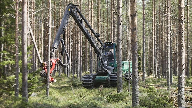 Skogsindustri. Foto: Johan Gunséus/TT
