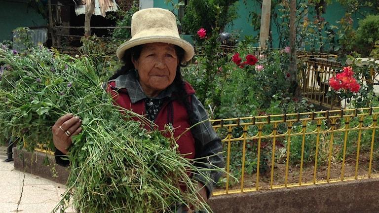 En kvinna från Carhuaz med sin börda av alfalfa.