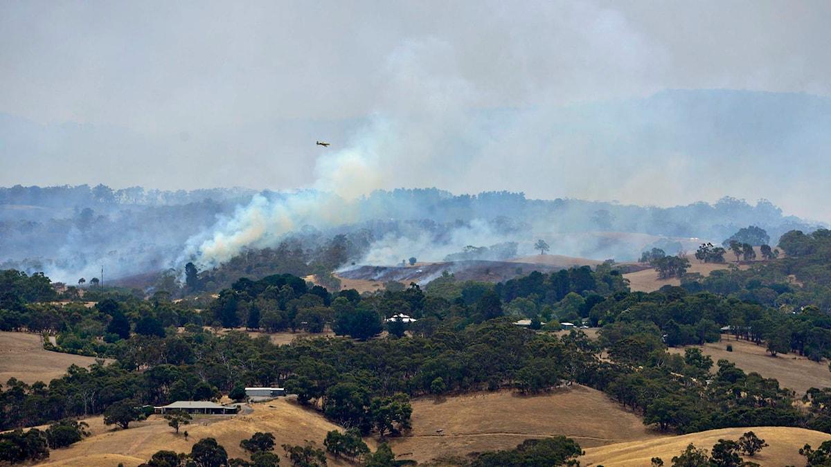 Ett flygplan flyger genom brandröken över Adelaide Hills i Australien, där en skogsbrand rasar. Foto: David Mariuz/TT.