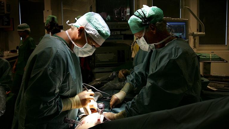 Två kirurger genomför en njurtransplantion. Foto: TT.