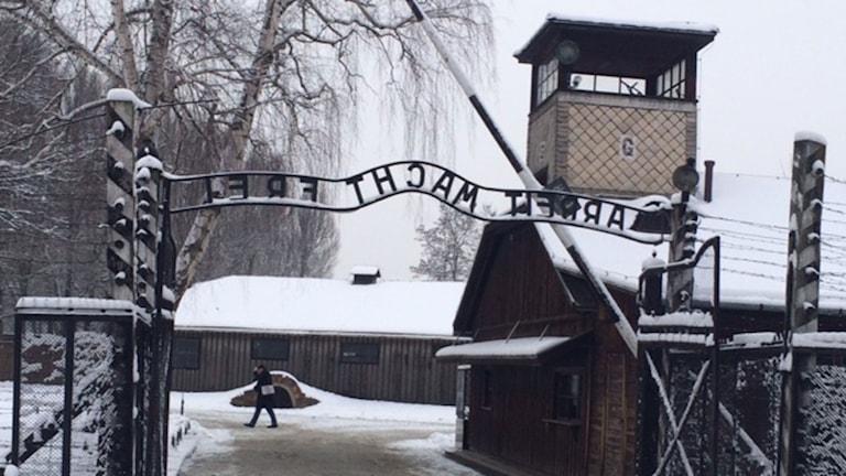 Ingången till Auschwitz, ett av nazisternas många dödsläger. Foto: Vincent Dahlbäck/Sveriges Radio.