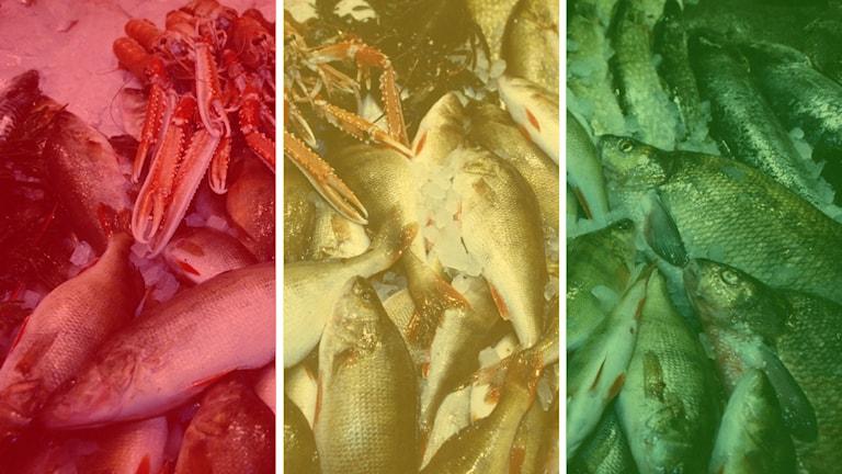 WWF:s lista över fisk och skaldjur som får rött, gult och grönt ljus. Foto: TT