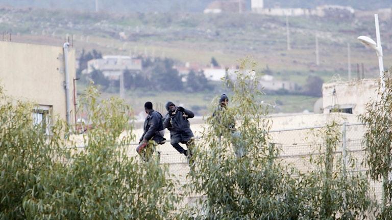 I början av februari försökte över 600 flyktingar klättra över stängslet från Marocko till spanska exklaven Melilla. Foto: Angela Rios/TT