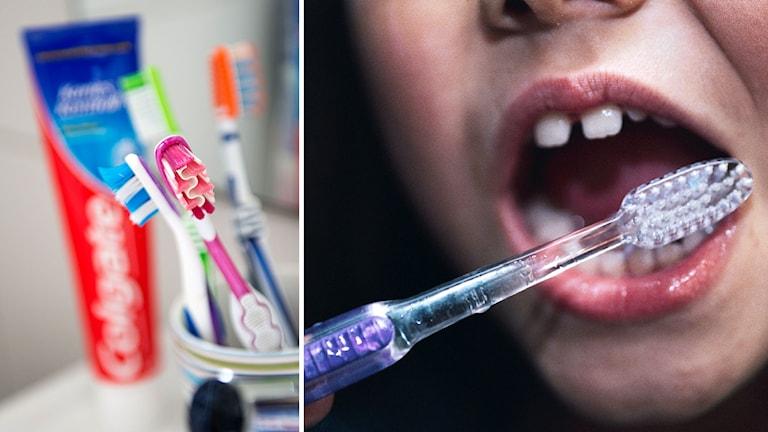 Colgate, tandkräm, tandborstning
