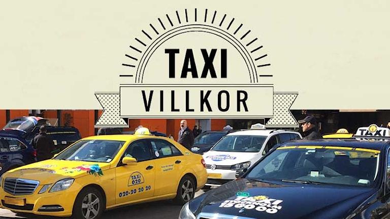 """Skylt med texten """"Taxivillkor"""" över en bild med parkerade taxibilar. Foto: Sveriges Radio."""