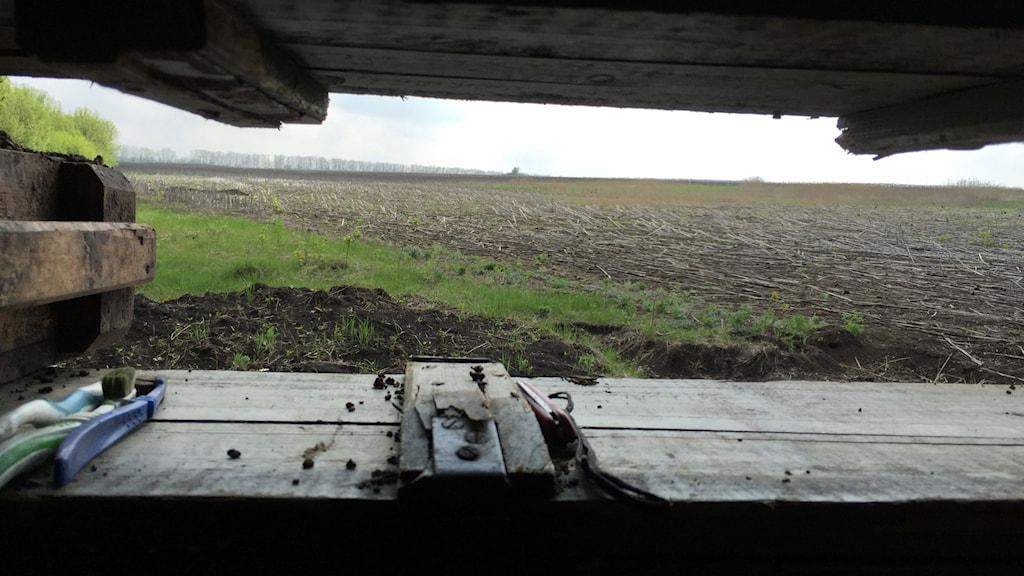 Utsikt över svarta solrosfält från en ukrainsk armepostering i Donbas som beskjuts regelbundet. Foto: Maria Persson Löfgren/Sveriges Radio.