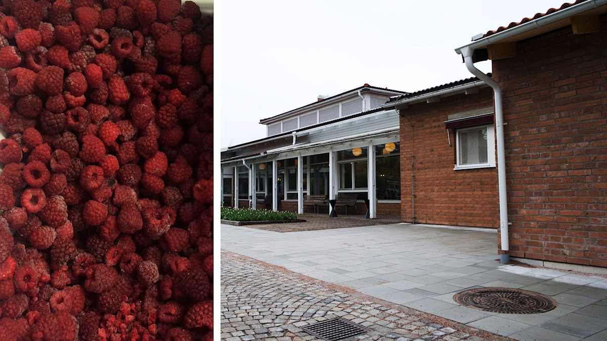 Ett montage av två bilder. Till vänster frysta hallon och till höger ett äldreboende i Ljungby.