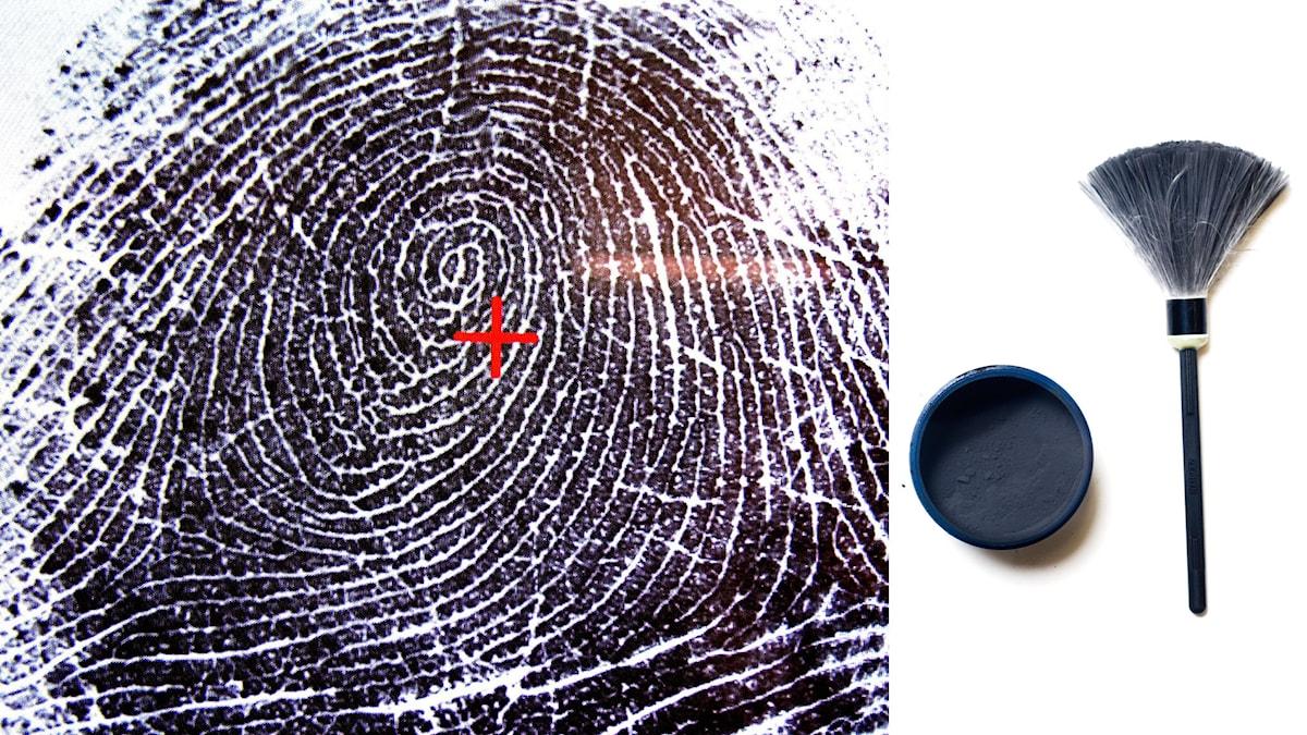 Fingeravtryck och en fingeravtrycksvippa som används av polisen. Foto: Björn Larsson Ask/TT, Staffan Löwstedt/TT
