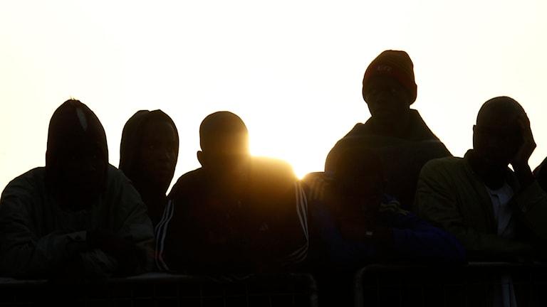 Migranter, siluett