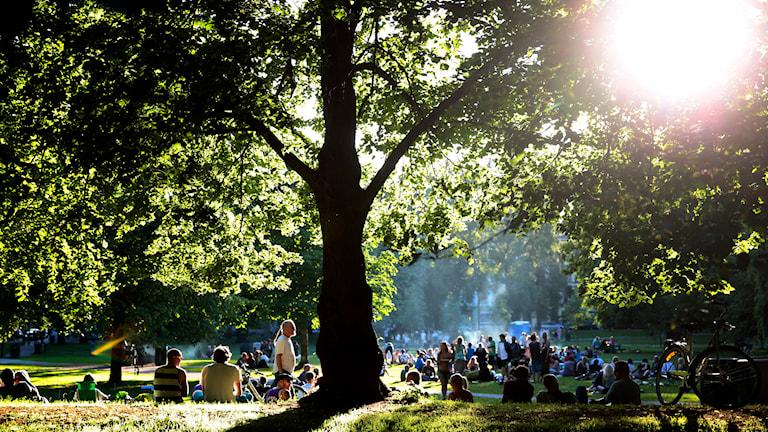Sommarstämning i en park. Solen skiner och människor har picnic och grillar. Foto: TT.