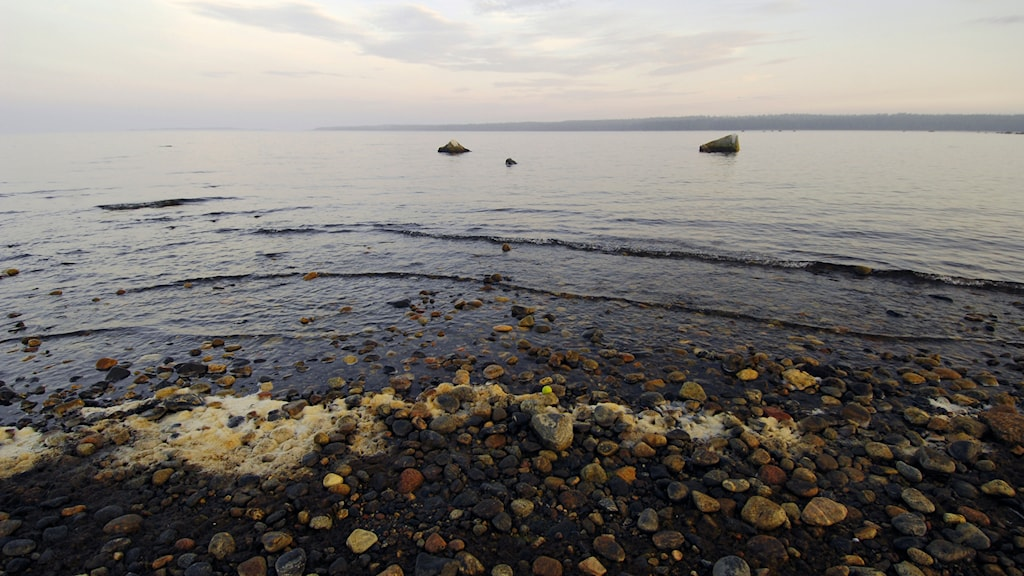 Östersjön. Foto: Hasse Holmberg/TT