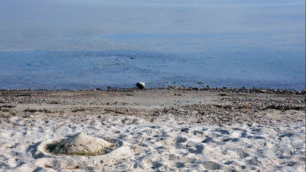 En sandstrand längs Östersjökusten. Foto: Hasse Holmberg / TT