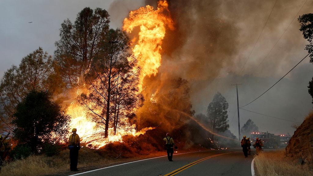 Brandmän kämpar med att släcka ett hus som brinner vid Morgan valley road nära Lower lake. Foto: Jeff Chiu/TT