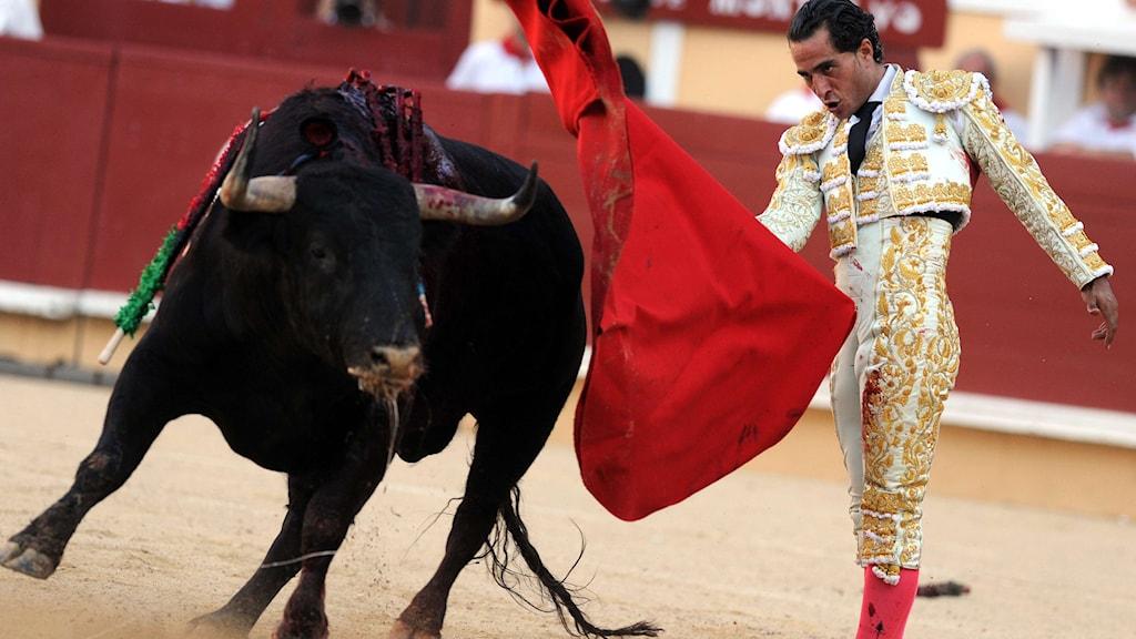 Spansk matador och tjur på sydfransk arena. Foto: Gaizka Iroz/TT