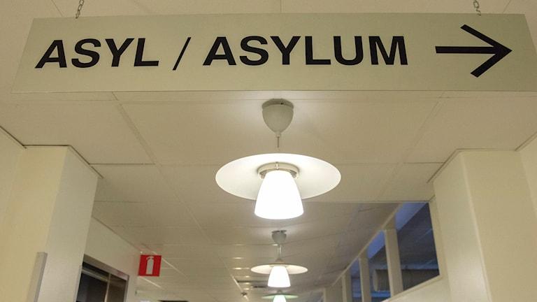 """Skylt med texten """"Asyl"""" hängande i tak"""