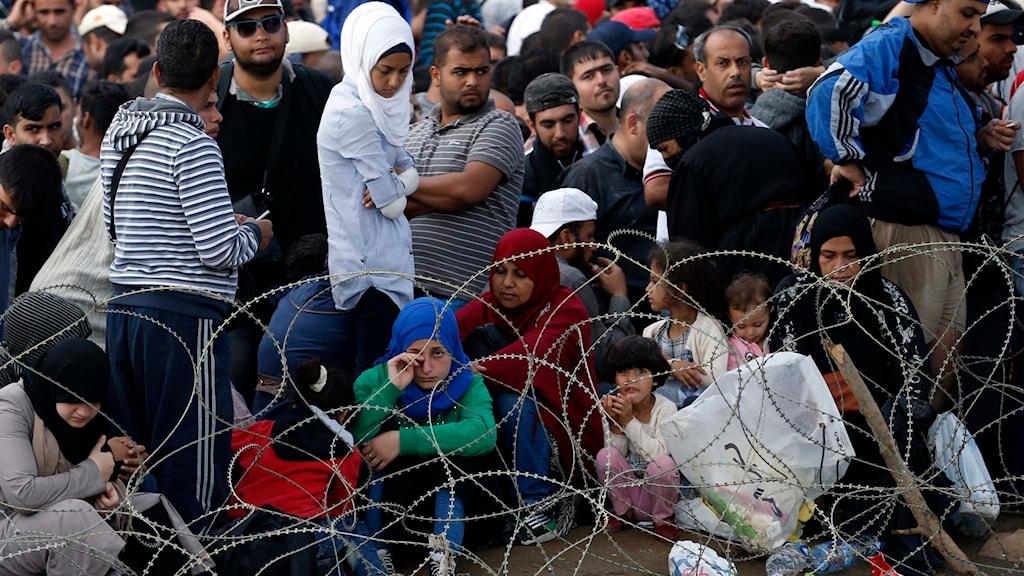 Flyktingar taggtråd. Foto: Darko Vojinovic/TT